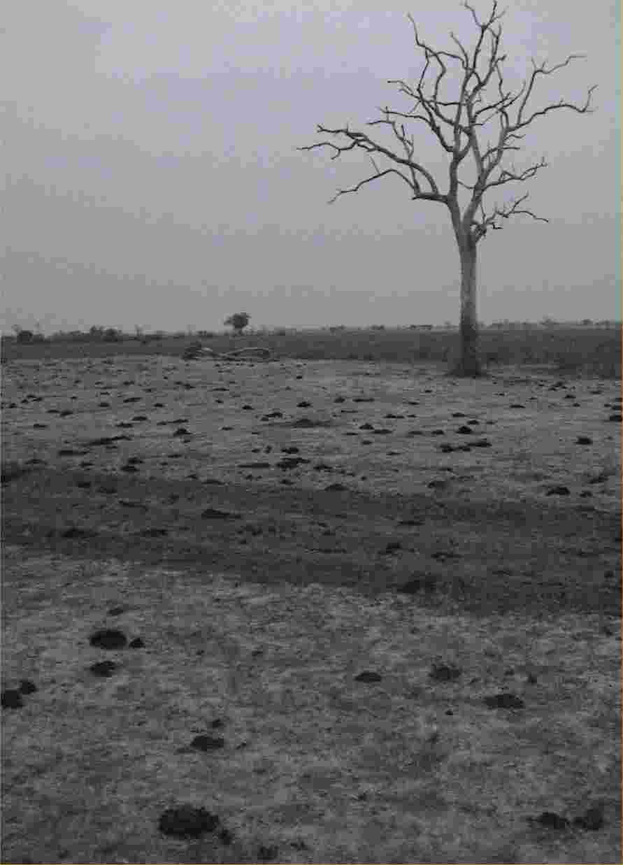 This late-afternoon picture shows animal poop all over the place, testifying to the abundance of wildlife in northern South Luangwa.